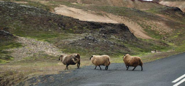 ovejitas irlandesas 2